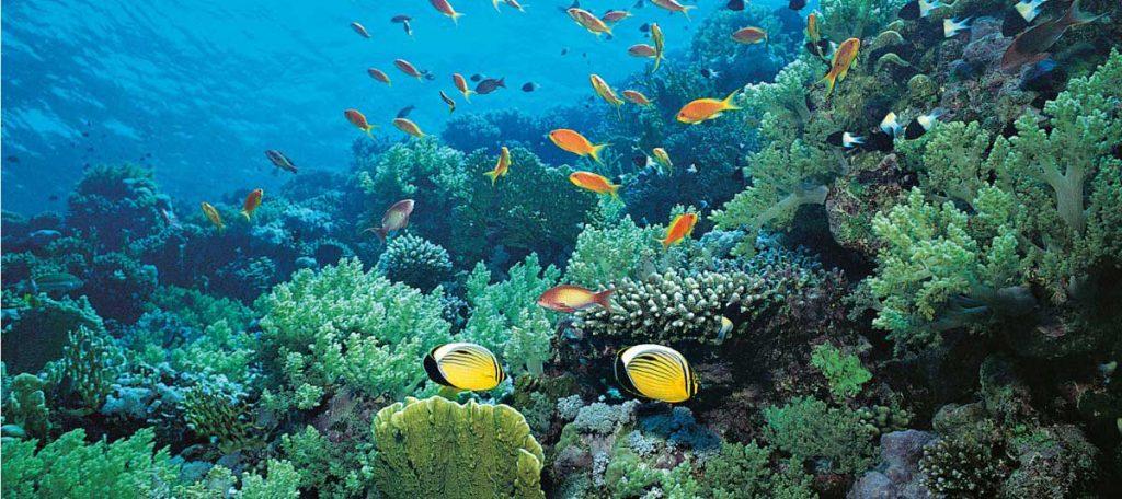 Underwater-Mediterranean-Sea