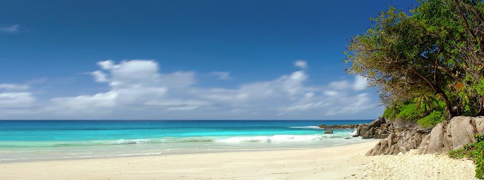 plage sable mer arbre